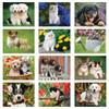 2019 Puppies & Kittens Calendars (ALL)