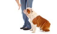 #1 Best Simple Dog Training Method