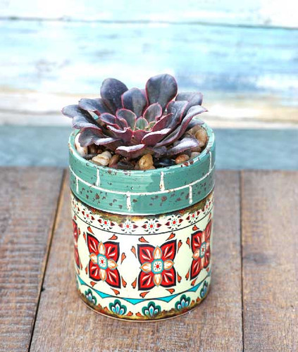 sea green multi Barcelona potted succulent