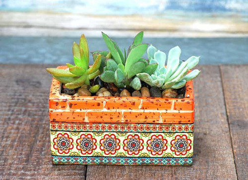 Barcelona Orange Multi  Rectangle Potted Succulents