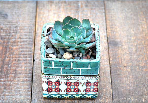 Barcelona sea green multi mini square potted succulents