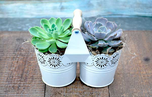 metal container with handle succulent garden view 2