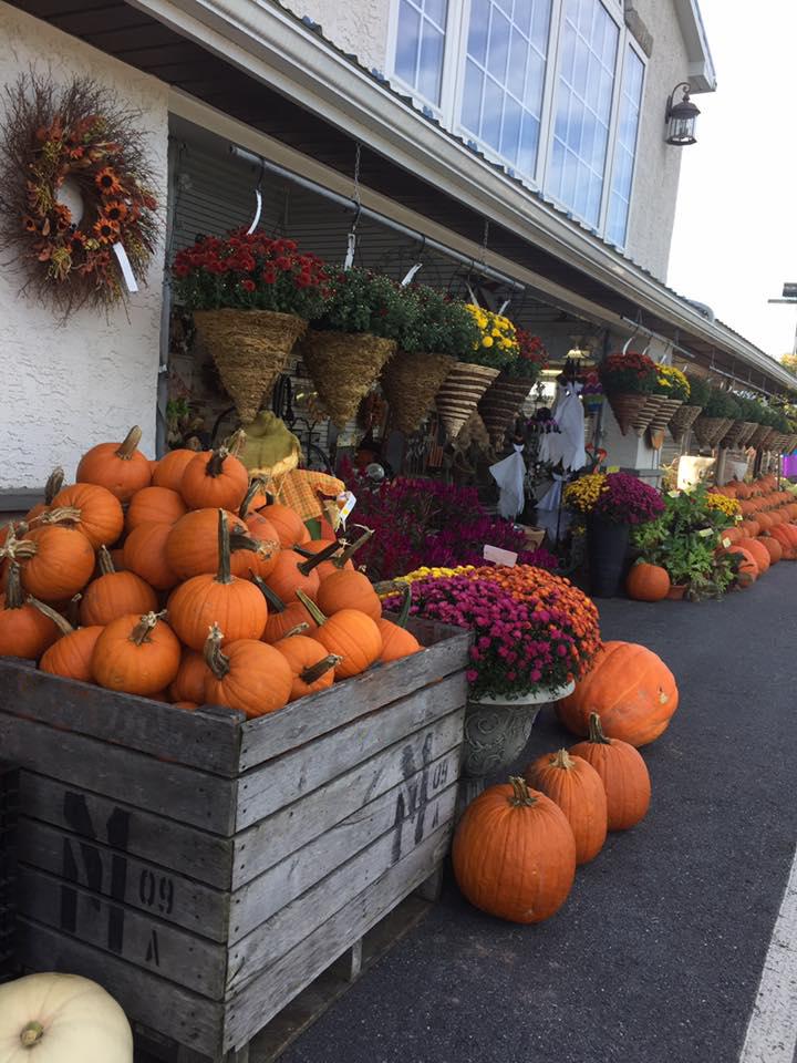 fall-store.jpg