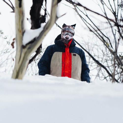 RAUCOUS RACCOON WINTER SNOW MASK