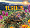 A Place for Turtles by Melissa Stewart