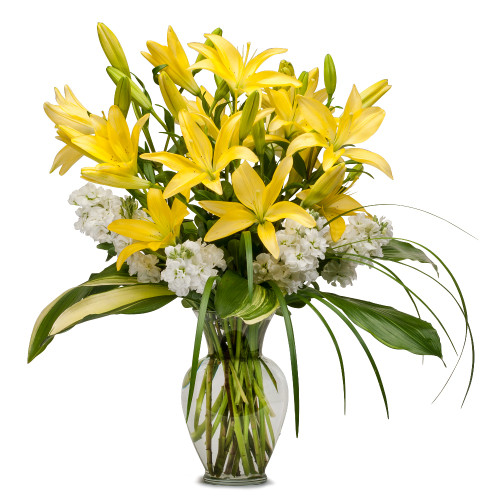 Lilies and Stock