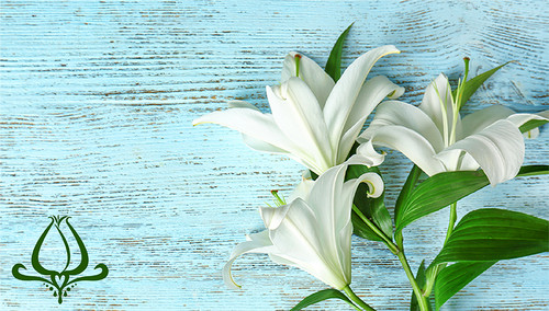 Philadelphia: The Story of the Easter Lily