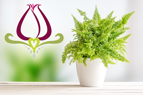 Get Serene This Season with Indoor Plants!
