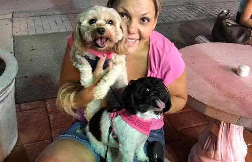 Gigi the cavapoo and Sasha the havanese are both happy while being held by their owner