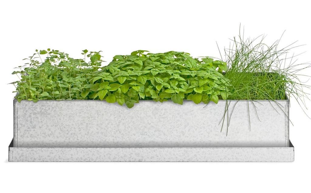 Culinary Herbs Window Grow Box