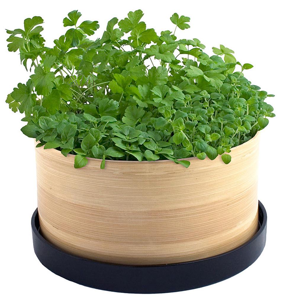Culinary Herb Bamboo Grow Box