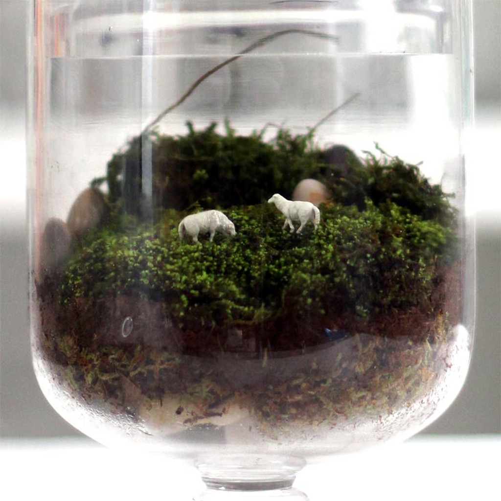 Grazed and Confused Terrarium