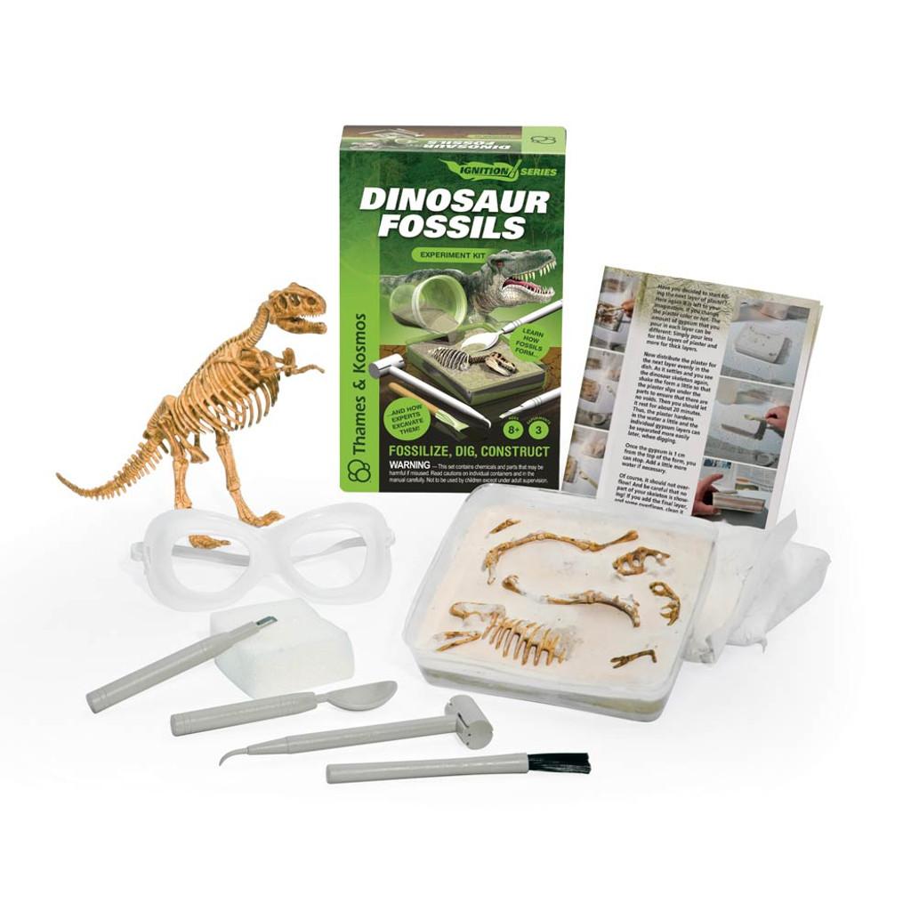 Dinosaur Fossils Kit