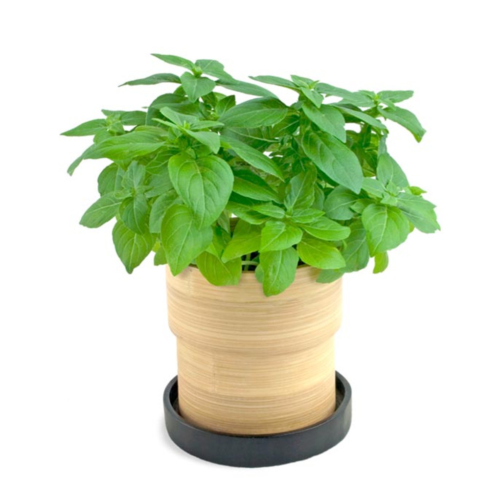 Basil Grow Pot