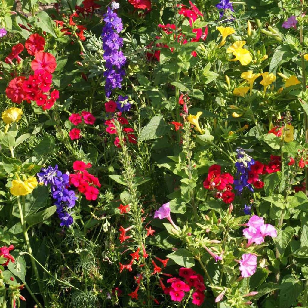 Hummingbird Scatter Garden