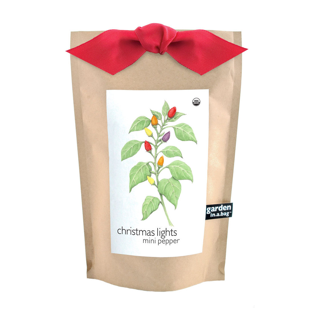Christmas Lights Pepper Garden-in-a-bag
