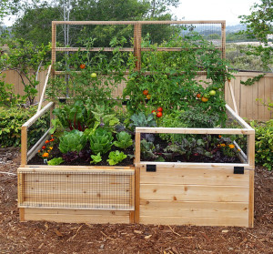 3' x 6' Raised Garden Bed With Hinged Fencing and Trellis