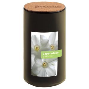 Paperwhites Grow Bottle