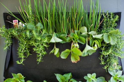 Vertical Gardening Woolly Pockets - Mini Wally One