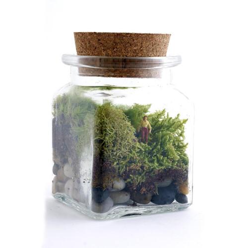 Le Petit Singularite DIY Terrarium