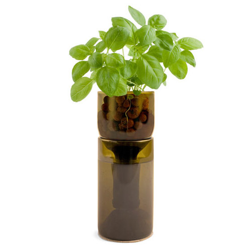 Recycled Grow Bottle - Basil
