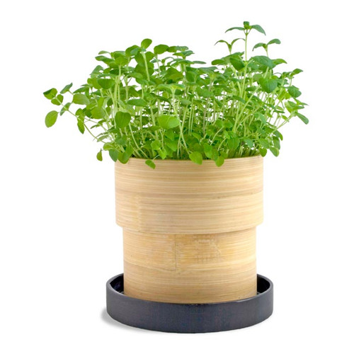 Oregano Grow Pot