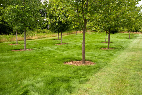 Mowed and Unmowed Eco-Lawn
