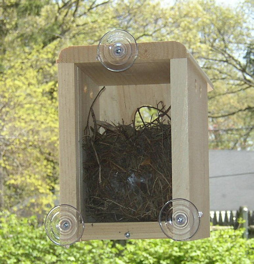 Window Nest Box Eartheasy Com