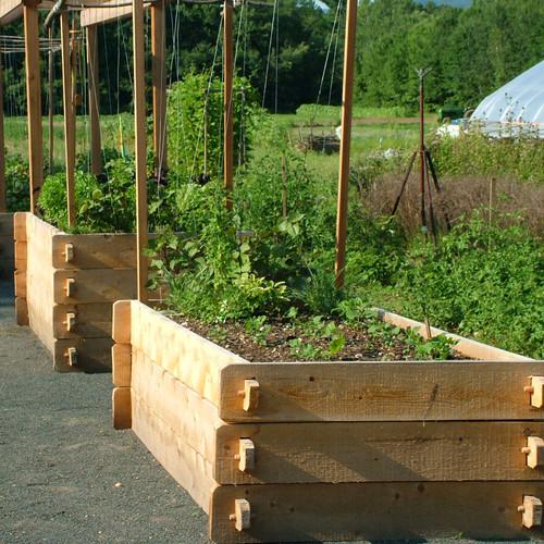 Large Vegetable Garden Layout Fence