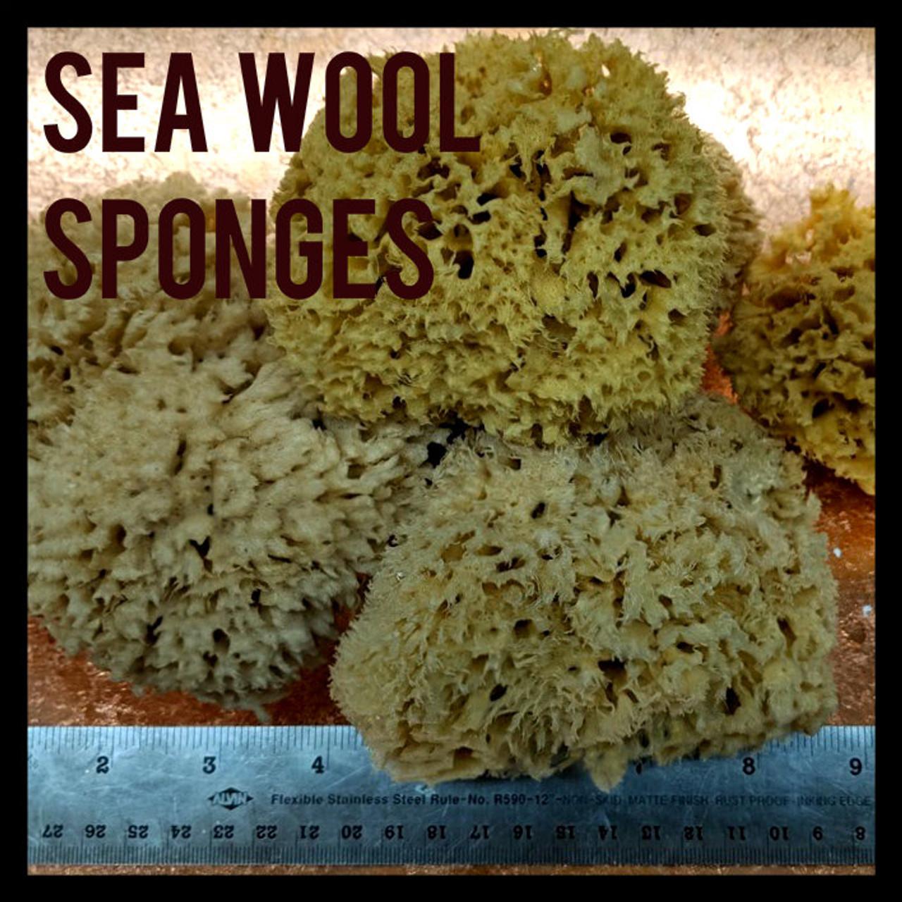 Sea Wool Sponges