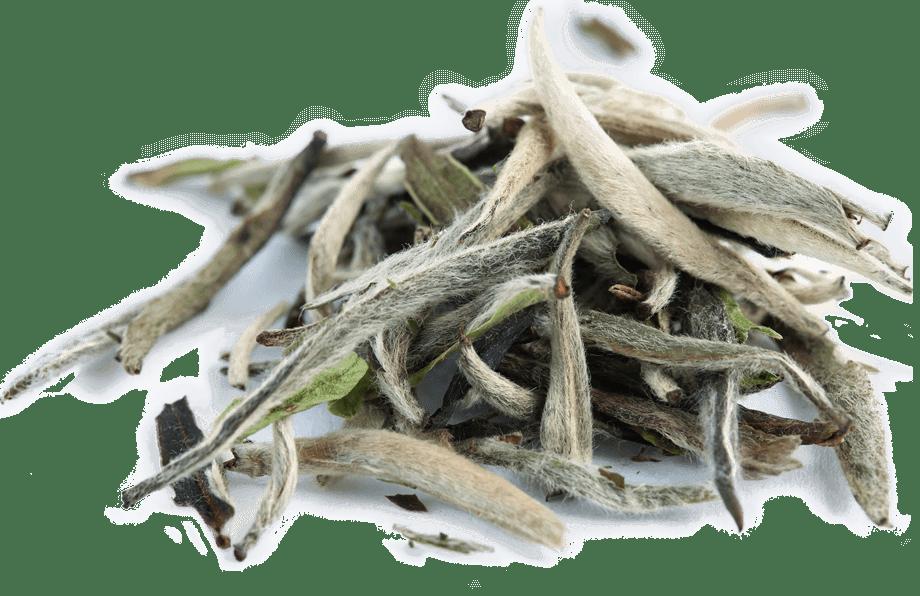 Organic Silver Needle White Tea