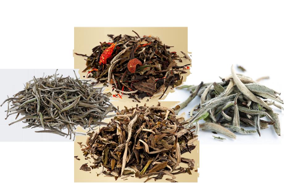 Organic White Tea Sampler