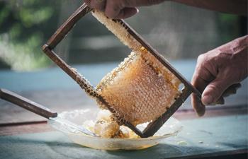 Bee Seasonal Honey