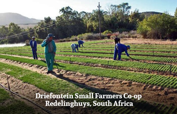 driefontein-small-farmers-co-op-redelinghuys-south-africa-1.jpg