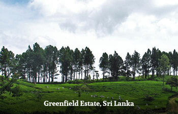 greenfield-estate-sri-lanka.jpg