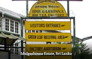 idulgashinna-estate-sri-lanka.jpg