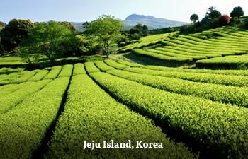 jeju-island-1.jpg