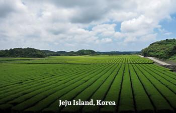 jeju-island-3.jpg
