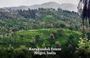 korakundah-estate-nilgiri-india.jpg