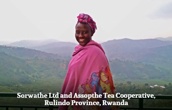 Organic White Tea from Rwanda