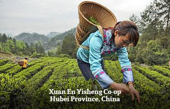 xuan-en-yisheng-co-op-hubei-province-china.jpg