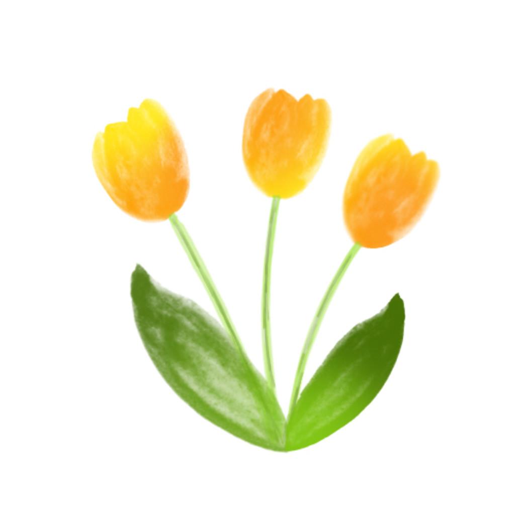 Flowers - Tulip
