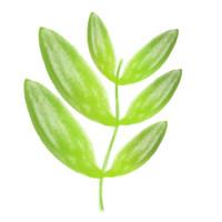 Flowers - Leaf