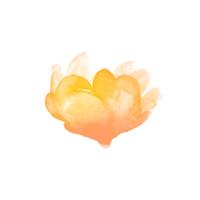 Flowers - Rose