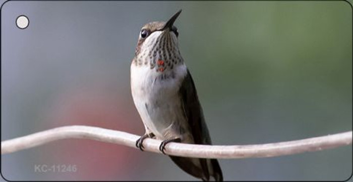 Hummingbird - Perched On Branch Novelty Key Chain