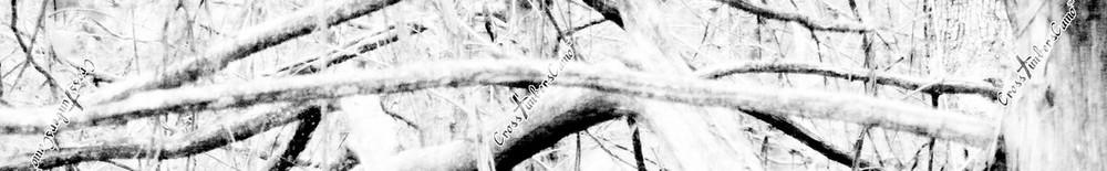 CrossTimbersCamo-snow camo