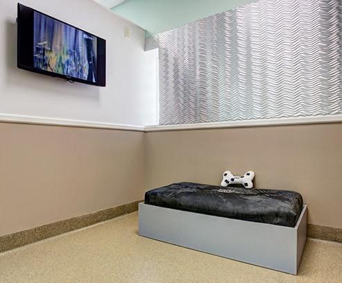Posh Pet Hotel Room