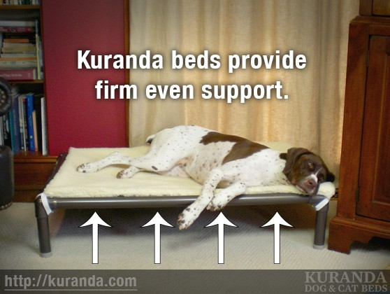 Elevated Dog Beds provide firm, even support