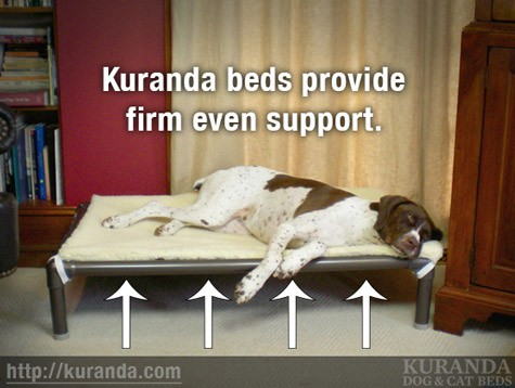 Kuranda dog beds provide firm even support