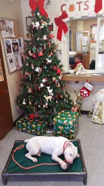 Chistmas at Town of Huntington Animal Shelter